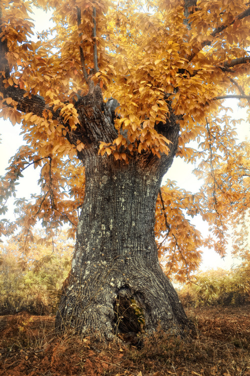 woodendreams:   (by Zú Sánchez)