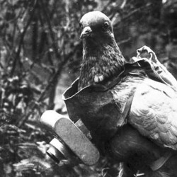 Pigeon with German miniature camera, taken during the First World War, 1914
