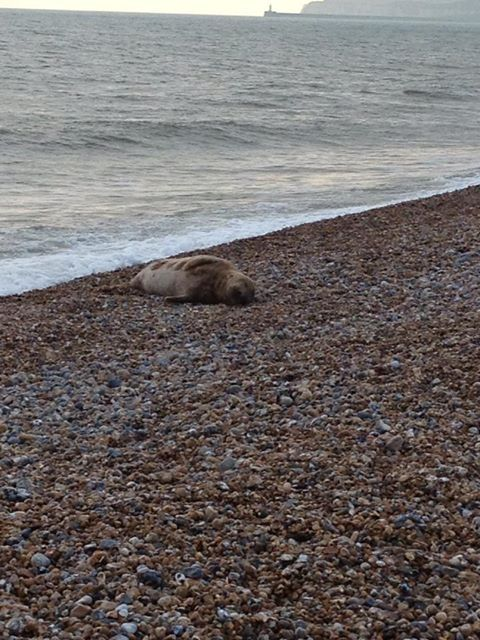 There is a seal on the beach opposite my sister's flat. Look at it! So relaxed!