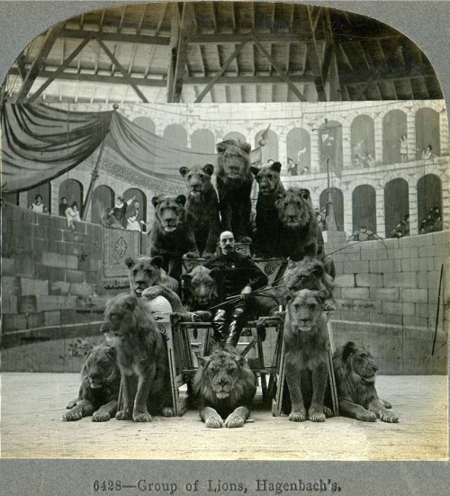 Russian Circus - The Lion Tamer and His Lions (1905)