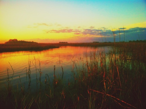ethandthorn:  nightmaresinjax:  Old Florida sunset in the swamp  marsh, really, but who's counting?