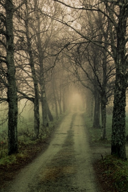 0rient-express:  A foggy day in Røyken | by Børth Aadne Sætrenes.