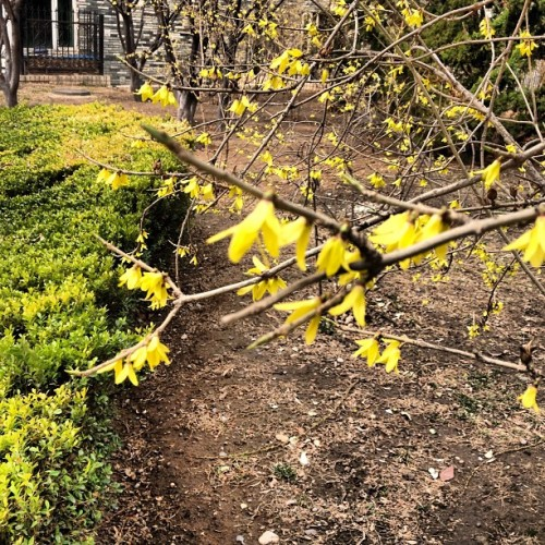First sign of spring! (at 世纪城)