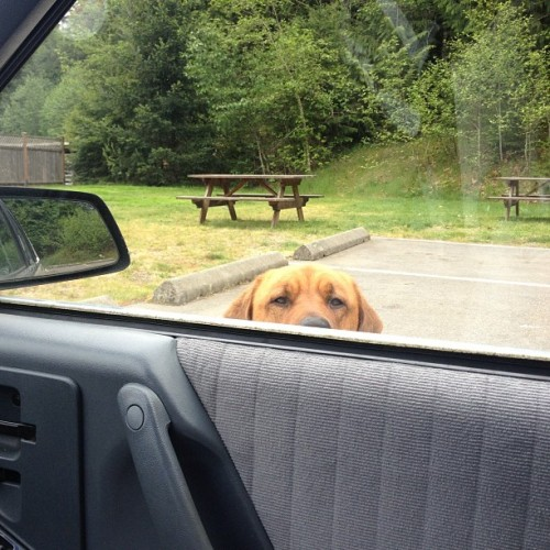 Oh, hello! #dog #animals #curious #friend