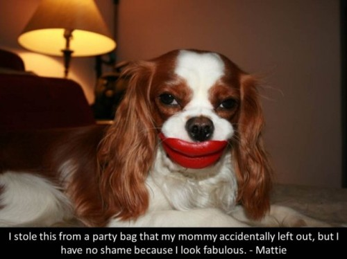 dogshaming:  How 'bout that kiss?  I stole this from a party bag that my mommy accidentally left out, but I have no shame because I…  View Post shared via WordPress.com
