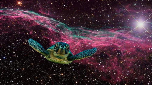This could all be just a turtles dream in space.