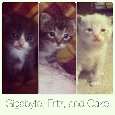 Meet our new little kitties. Giggy, Fritz, and Cake[: we want to keep them all together, just one bit happy family. #kittens #cats #cutefurrycritters #newbabies #instadaily #dayinthelife #instagreat #instagood #webstagram