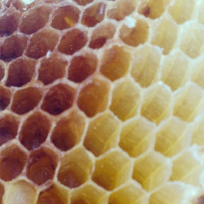 #macro of a #beehive from my #smartphone #icnolimits @instacanvas @olloclip