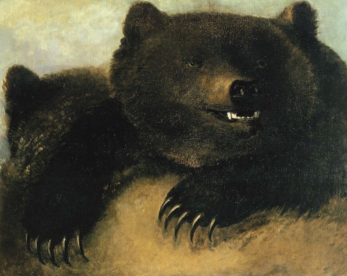 cavetocanvas:  George Catlin, Weapons and Physiognomy of the Grizzly Bear, 1846-48 From the Smithsonian American Art Museum:  The prairies of the 1830s were a paradise for animal predators as well as enthusiastic huntsmen. Eagles, wolves, mountain lions, and grizzly bears were among the beasts hunting the abundant antelope, elk, and buffalo. George Catlin described many encounters between predators and prey, but could only make quick sketches of these incidents as they unfolded, in hopes of capturing the excitement in more finished studio works. Catlin disapproved of white settlers' encroaching on Indian lands, yet he continued to describe and paint scenes that were calculated to appeal to Euro-American sportsmen, enticing them westward for the thrilling hunts he described.