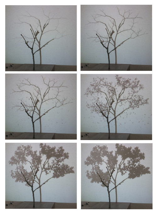 Untitled (l'Arbre et son ombre) 2008 video projection on natural tree branch, DVD-r, projector, wood 3 x 19 x 92, 1 x 7,5 x 36 in
