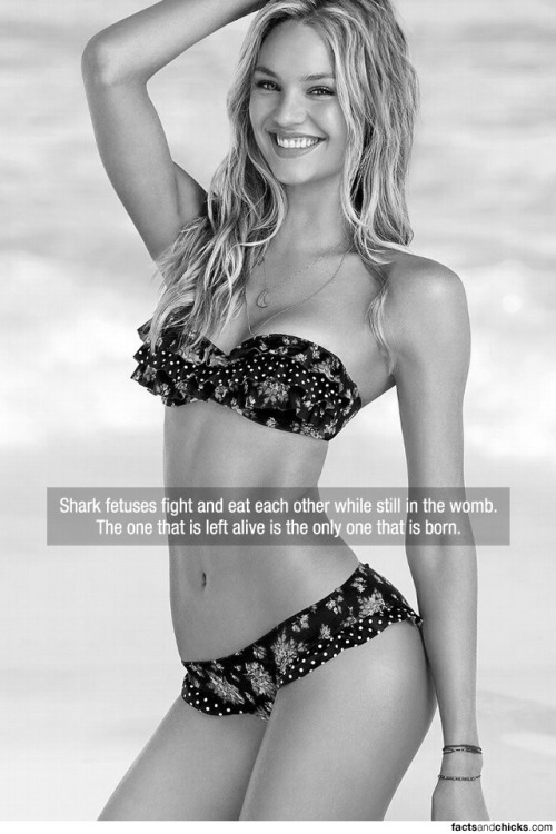 factsandchicks:  Shark fetuses fight and eat each other while still in the womb. The one that is left alive is the only one that is born. source