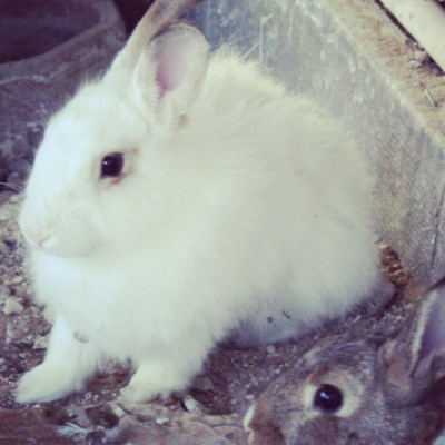 Found the cutest bunny♥♥ #fluffy #baby #farm #instagramqatar