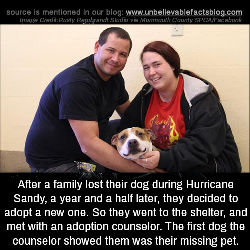 hurricane hurricane sandy incidents found Coincidence heartwarming submission