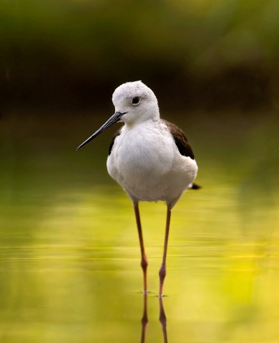 llbwwb:  Long legs by Stefano Ronchi.