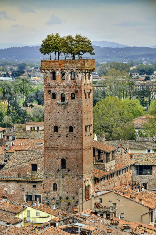allthingseurope:  The Guinigi Tower, Lucca, Italy (by Digitaler Lumpensammler)
