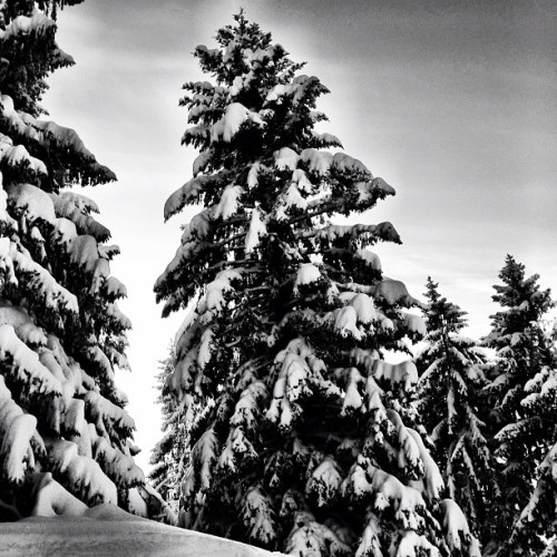 Deep #winter last week … #snow #bregenz #bw