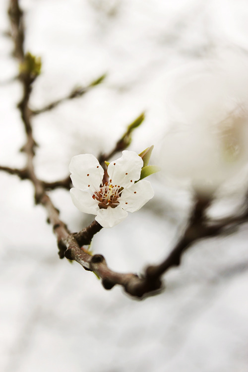 Spring! by Agata Ryszkowska on Flickr