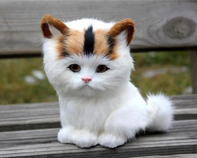 What a strange cat o.O ♥ Animal blog ♥