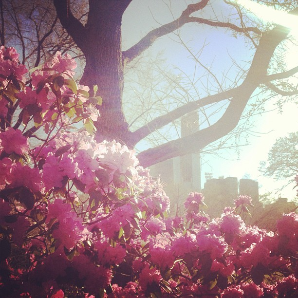 ugh another flower picture  (at Central Park Boathouse)
