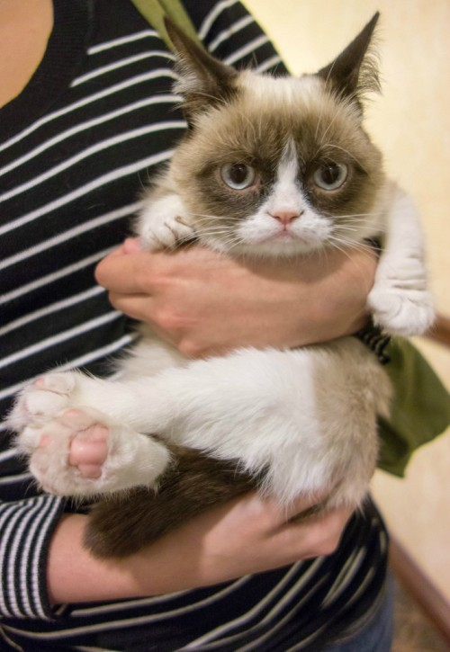 Grumpy kitten [via]