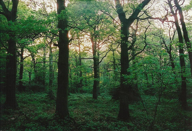 Trees by Sam Tait on Flickr.