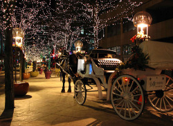 Christmas winter beautiful christmas lights december horse downtown tis the season Winter is Coming christmas shopping christmas blog seasons greetings christmas decorations carriage winter nights christmas is coming seasons tidings december is coming christmas street carriage ride