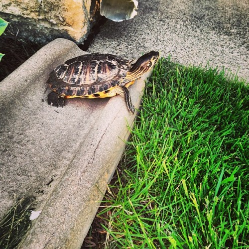 Squirtle has a new favorite place: the gutter on the porch.