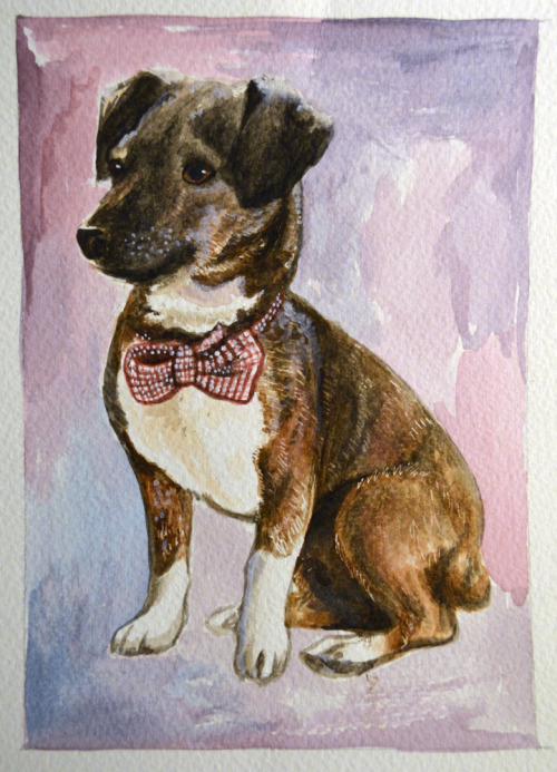 Dapper pet portrait!