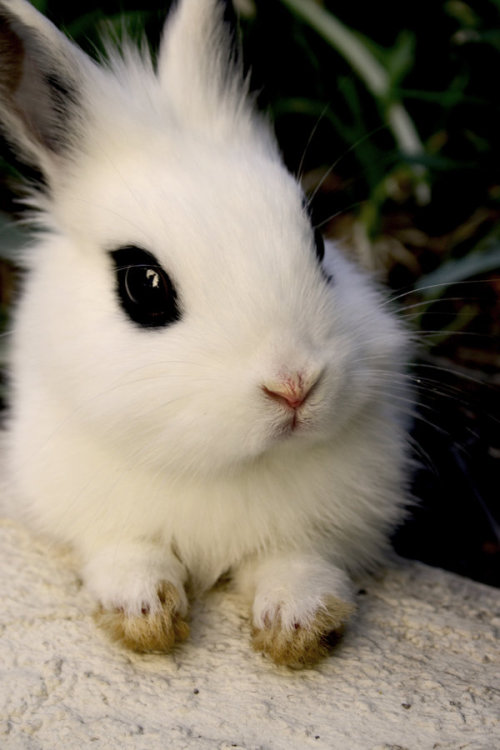 animalfunwithnature:  Day 243. by ~with-wings09 RIP bunny Chuck :'c