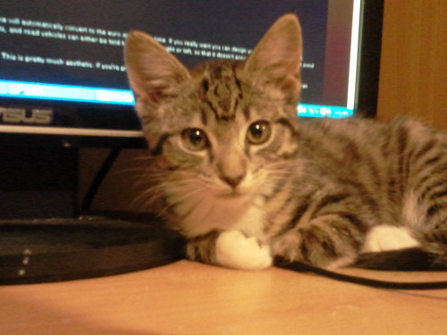 Kitty waiting for Mitty to stop programming!-Mitten.