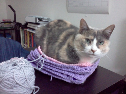 get off of there cat. you are not a granny square.