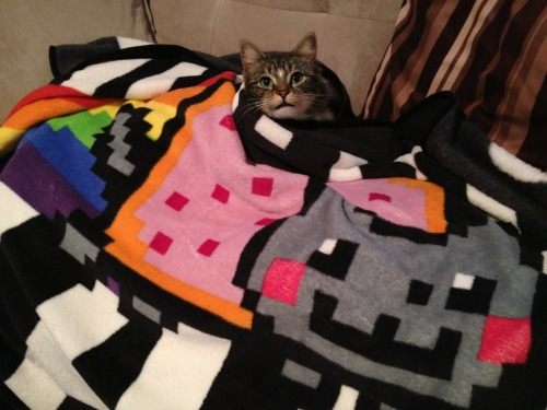 Nyan Cat cat snuggie (or human blanket). SO SOFT. SO CUTE. Coming soon!