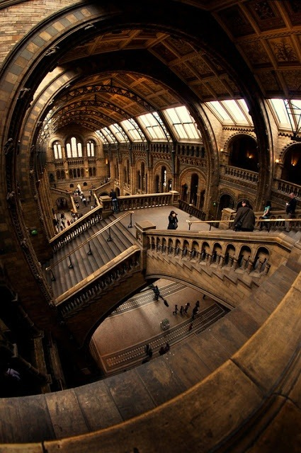 Stairs, Natural History Museum, London photo via nobuo