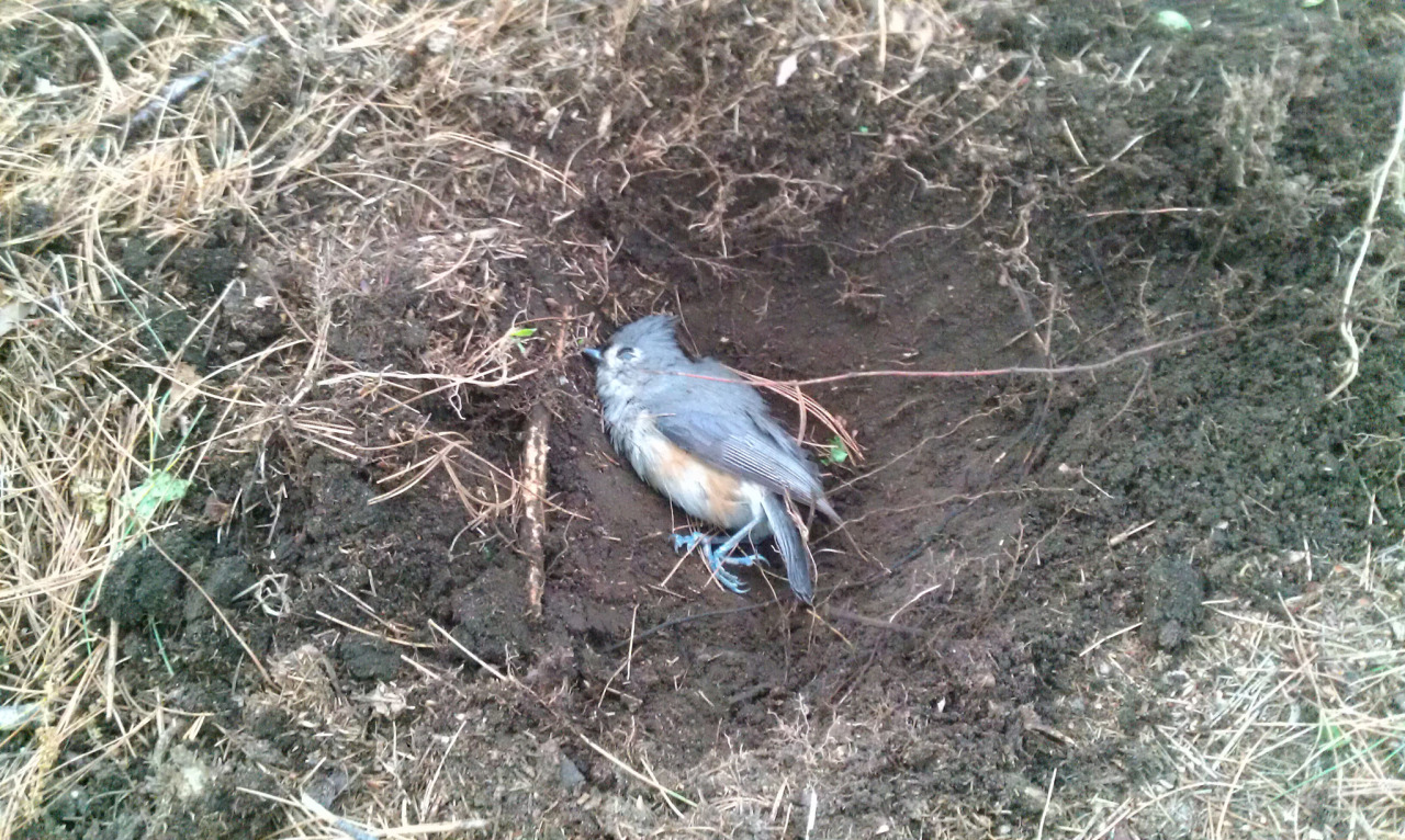 small bird fell out of the sky right in front of me so i buried it