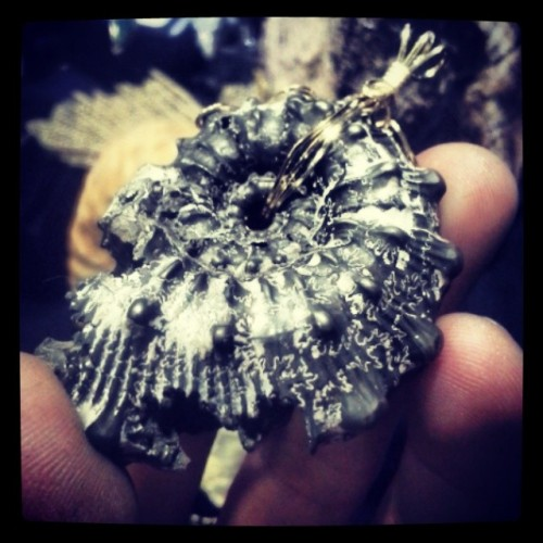 drasticshift:  #ammonite