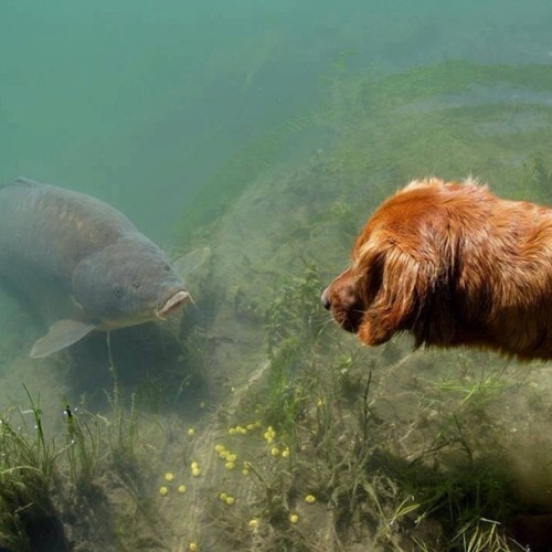 Amazing photo.. Re blogged from @monkeyxclimber #carp #dog #amazing