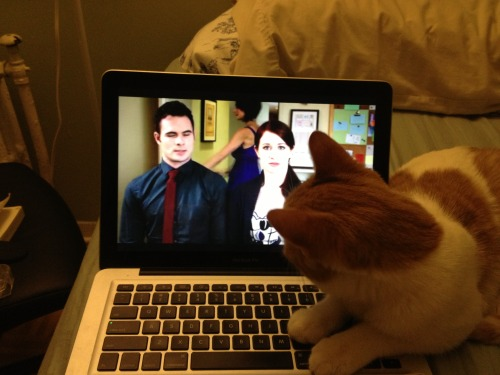 Bingley (the cat) watching the lizzie bennet diaries