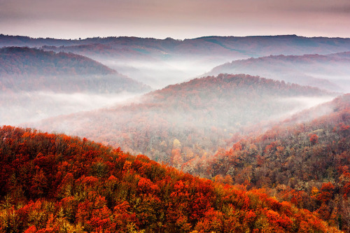 fuckyeahhiking:  treeporn:  vlynx: Autumn Fogs by Evgeni Dinev  shit, i miss home