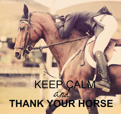 keepcalm-equestrians:  Thanks for the photo and submission! hannahequusphotography
