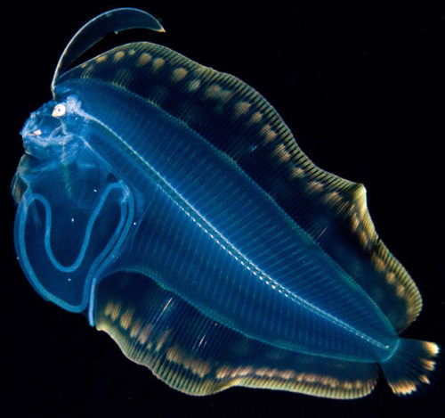 Luminous creatures captured by underwater photographer Joshua Lambus
