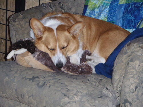 Nothin cuter than Winston snuggling with a walrus pillow pet