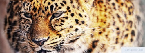 Cheetah 3 Facebook Cover
