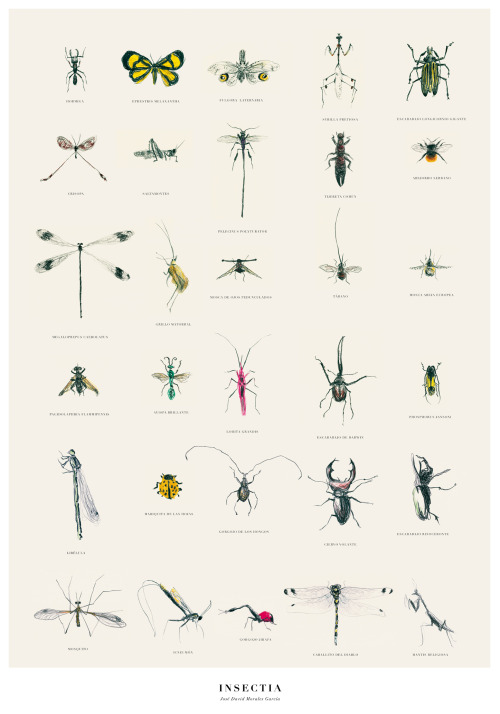josedavidmorales:  A class proyect made with wax crayons. Thirty insects. Un trabajo de clase hecho con Ceras Manley. Treinta insectos.