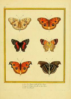 heaveninawildflower:  n198_w1150 by BioDivLibrary on Flickr. Planches enluminées d'histoire naturelle t.1 Paris? :s.n.,1765-1783? biodiversitylibrary.org/page/35203469