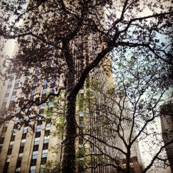 #newyork #lights #tree #nature
