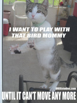 I want to play with that #bird…