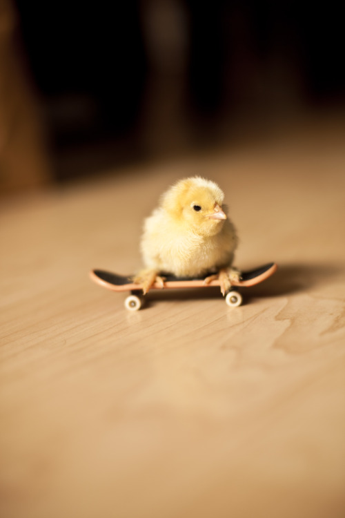 Chick on skateboard