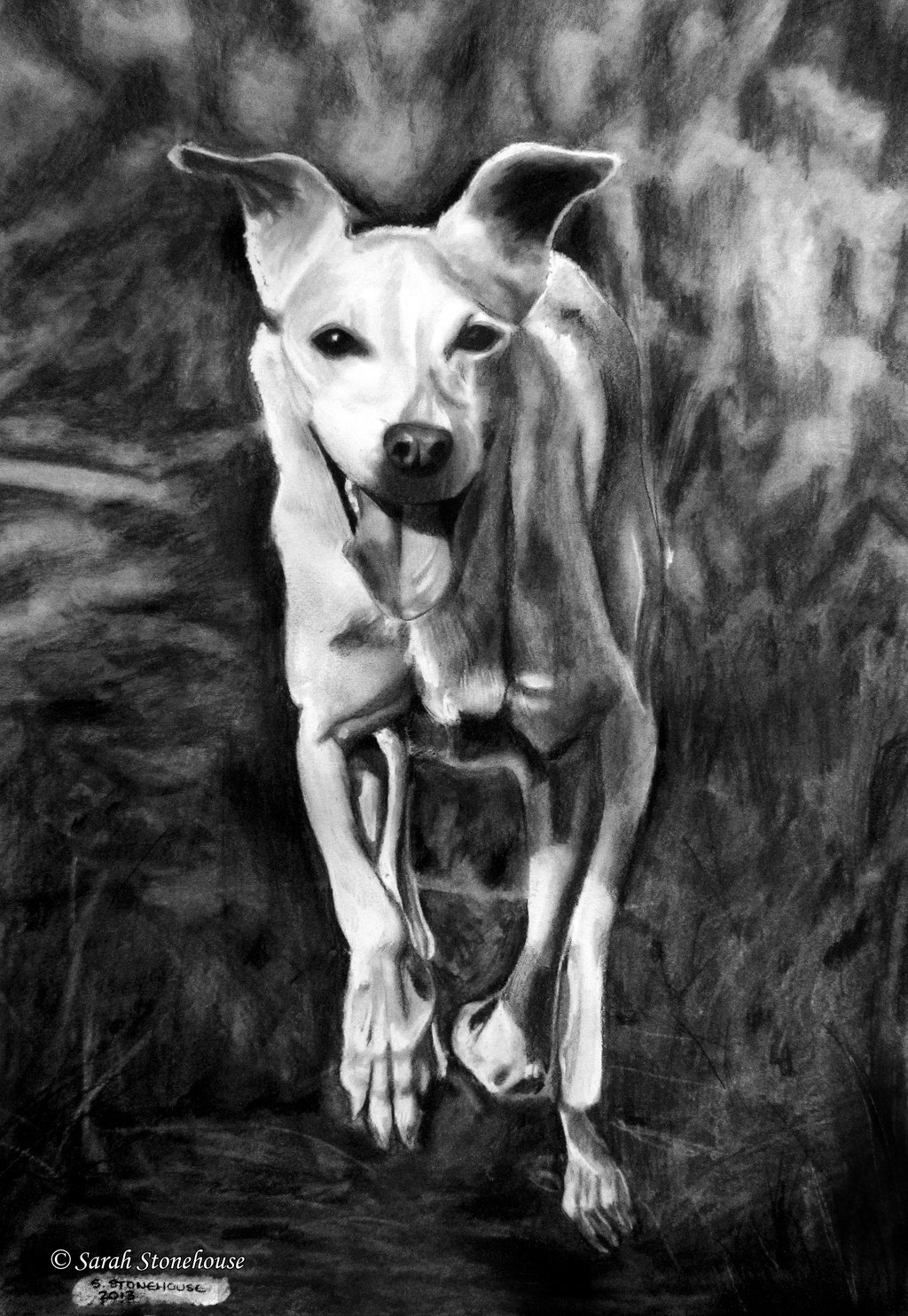 Roxy the Dog by *Sarah789 NEW DRAWING