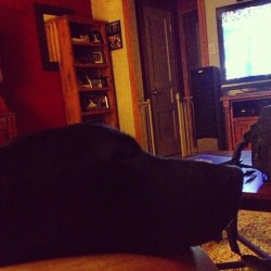 Watching the Super Bowl with my dog:)