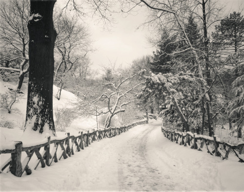 "Central Park winter path. Shakespeare Garden in the snow.I think back to days spent wrapped in the cold silence of freshly fallen snow in Central Park.   The labyrinth-like path leading from Shakespeare Garden lined by a wooden fence twists and turns in the snow winding its way under trees whose branches reach out to each other like eager arms awaiting the warmth of an embrace.  It's on days like this when the sun rests longer than usual and winter's essence seeps through every crack and crevice that the earth quivers a ghost shiver that rests in summer's memory.  —-  The rustic wooden fence rests on a four acre section of Central Park known as the Shakespeare Garden which is located in the west part of the park near 79th Street. On the 300th anniversary of William Shakespeare's death in 1916, this area was dedicated to Shakespeare and named. The plants and flowers that are found in this area are all mentioned in the works of the playwright and are also plants and flowers that are found in his garden in Starford-upon-Avon. There is even a white mulberry tree on this four acre plot of land that is said to have grown from a graft of a tree planted by Shakespeare himself in the 1600s.   While the paths that winds through Central Park's Shakespeare Garden is gorgeous in the warmer months of the year, it's absolutely stunning when snow has freshly fallen.  This photo was taken during one of the last major snowstorms (a blizzard) in New York City back in 2011.  We haven't seen snow like this, in this magnitude, since then.  I have been going through my photos from the two blizzards we experienced that winter season wondering if we will ever see snow like this again. Who knows?  —-View this photo with a comment thread on my Google Plus page—-Buy ""Central Park Winter Path"" Posters and Prints here, email me, or ask for help."